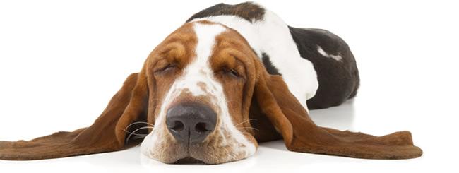 Por qu los religiosos le temen tanto a los perros - Es malo banar mucho a los perros ...